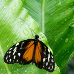 vlinder op een blad 2