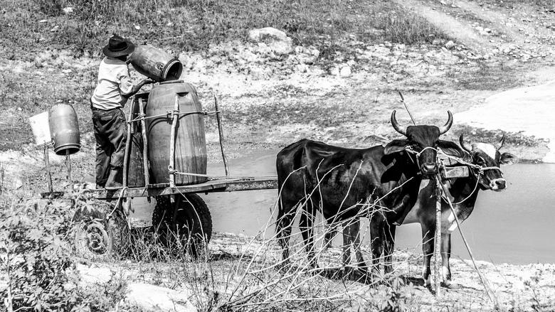 Water halen (groot zien) - In de kurkdroge regio Agreste in Brazilië haalt een boer water met zijn ossenkar.<br /> Dit gebied doet een beetje denken