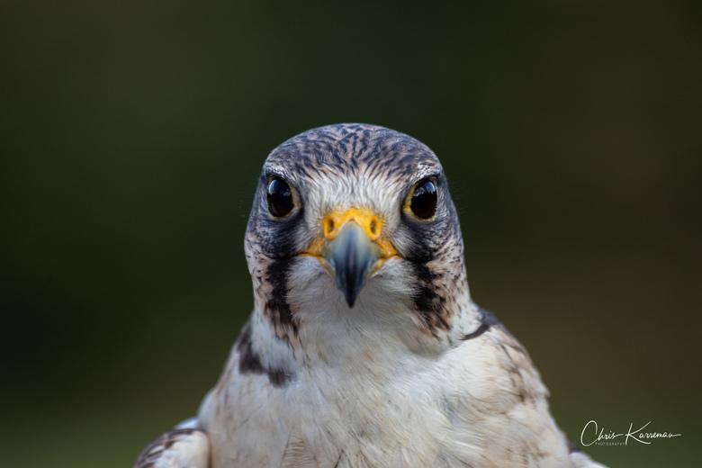 """Wildpark Daun-5 - """"Kijk naar het vogeltje"""". Met aandacht bekijken we elkaar."""