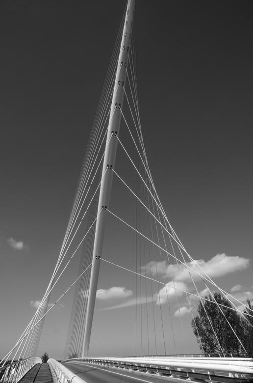 De Harp