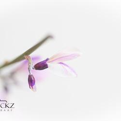Flowerfractals - JvHClickz-5