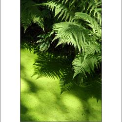 Green peace...