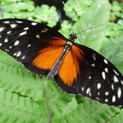 Vlinder in Emmen