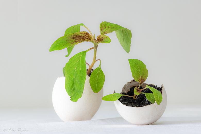 ei-plantje- - Modern stilleven met een twist