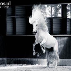 Stallion having fun