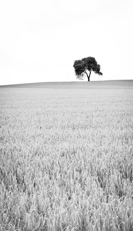 Lonesome - Je voelt je onbegrepen en alleen,<br /> toch zijn er zoveel mensen om je heen.<br /> <br /> Je voelt je slecht en dan weer goed,<br />