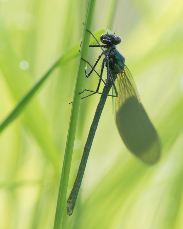 Verstopt in het gras - Deze zat ver in het gras verstopt... maar heel voorzichtig mijn camera tussen het gras zet en voila...