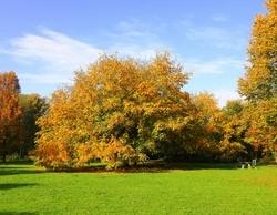Herfstkleuren in Almere