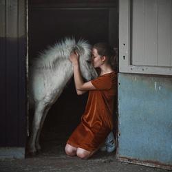 Bright Horse of Wonder
