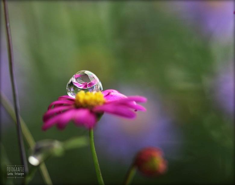 De druppel - Een druppel dat schittert op een bloempje van 1cm.