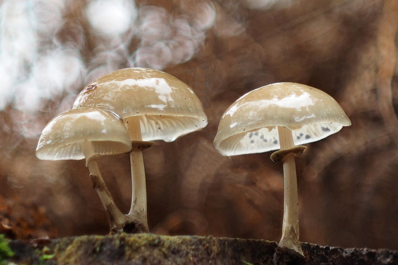paddenstoelen 01