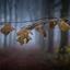 2019 takje voor mistig bos