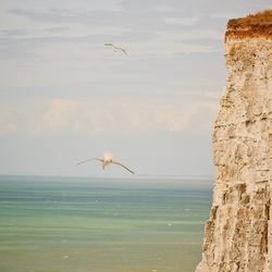 Meeuwen aan de rotsen