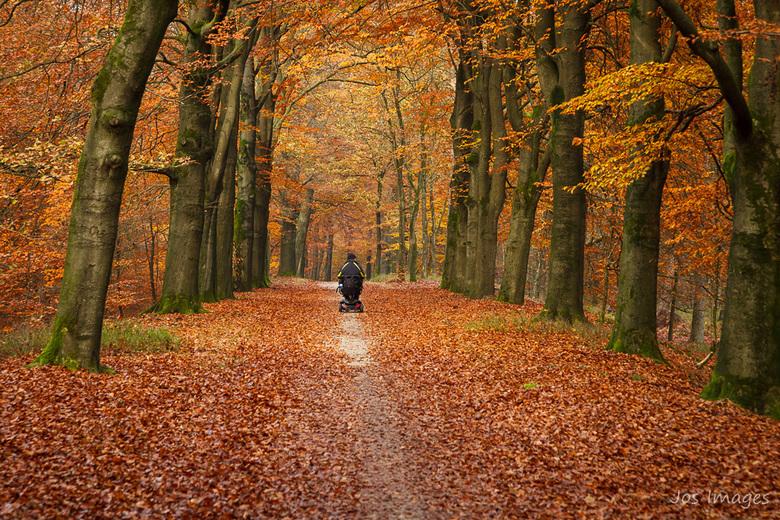Genieten - Herfst in het bos.<br /> Wat kunnen mensen daarvan genieten!<br /> Groet,<br /> Jos