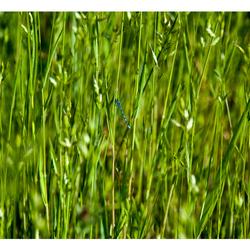 Nature Art 2011-01