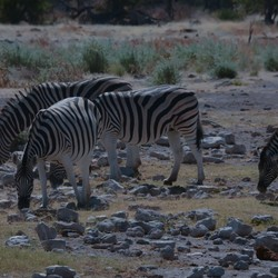 waterhole Ethosa