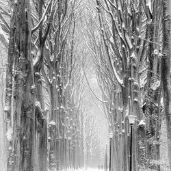 Wederom Wonderlijk Winter Weer in Wassenaar