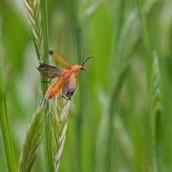 beweging tussen het gras