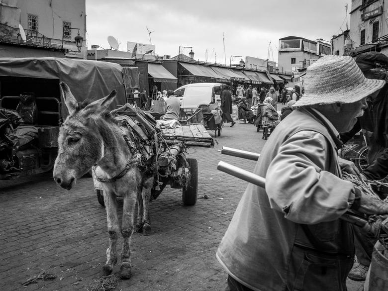 De ezel en het gekkenhuis - Arm pak-ezeltje is het eenzame rustpunt middenin de gekte van Marrakech. Ik was blij dat het niet heet was.
