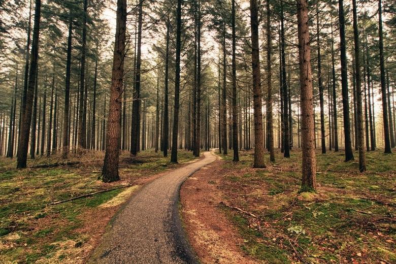 Mighty forest - Onderweg even afgestapt om te genieten van dit mooie bos. Daarbij nog snel even de tijd genomen een plaatje te schieten, om vervolgens