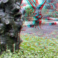 Bomen Chinese Tuin Blijdorp 3D