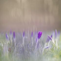Let's start, springtime!