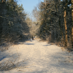 Wandelen door de bossen
