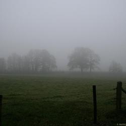 Meadow in Dust