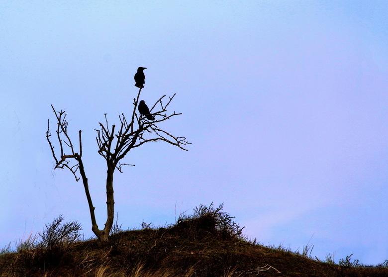 The Birds 01 - Hoe belangrijk is de lucht in een foto? Heel belangrijk. Met een andere lucht verandert de hele sfeer. Dit is de oorsponkelijke foto, w