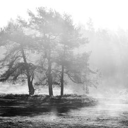Misty Business