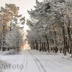 Wandeling Brobbelbies sneeuw-0158