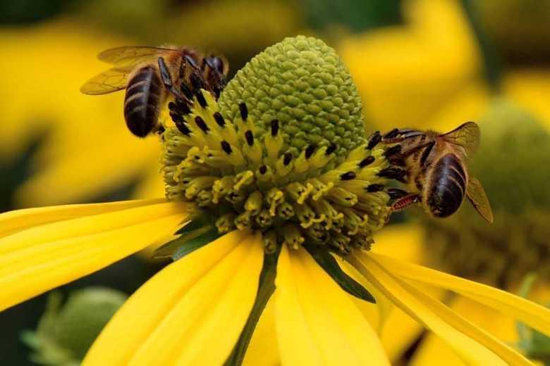 Bezige bijen -