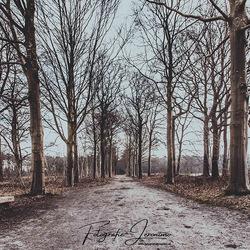 Ontbossing op landgoed Visdonk (Roosendaal)
