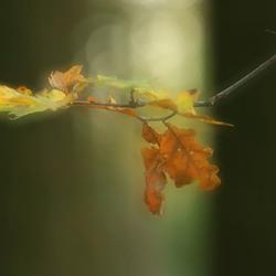 Een toefje herfst .............