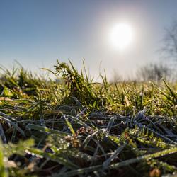 Ontdooiende grasprietjes in de winterzon
