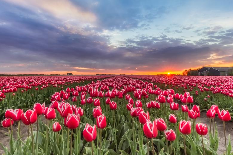 Rood, wit en ... - ... een beetje blauw in de lucht. Zondag 5 mei  vieren we dat we in vrijheid mogen leven in ons mooie land en staan we er bij stil,