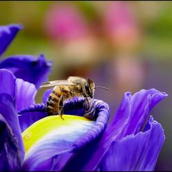bloem met beestje............