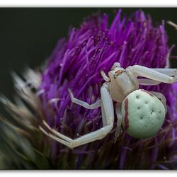 Spinnen.