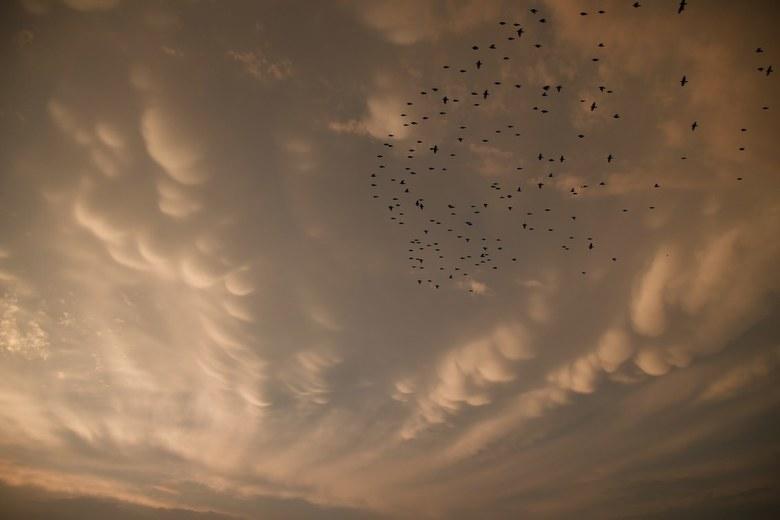 Mammatus  - Bijzondere mammatus wolken vanavond!