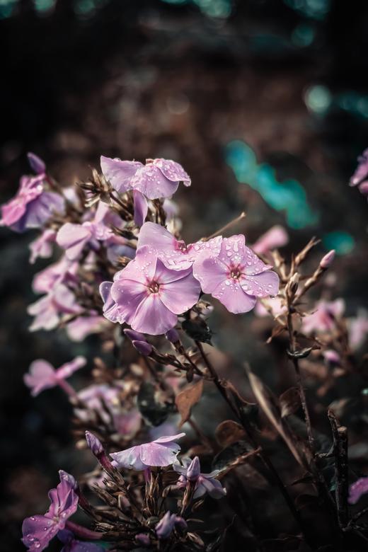 Flower -