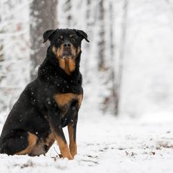 Mexx in de sneeuw