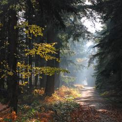 Mastbos herfst