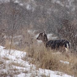 in een sneeuwbui