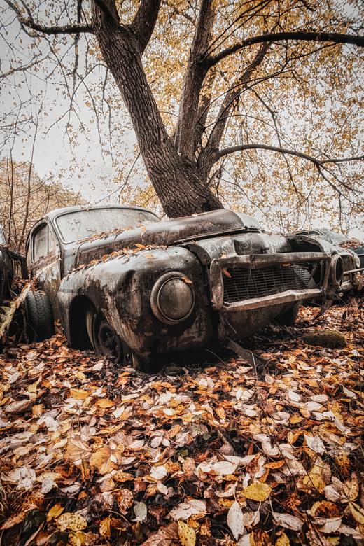 Autumn decay - Een oldtimer,langzaam aan aan het wegrotten tussen de herftbladeren.