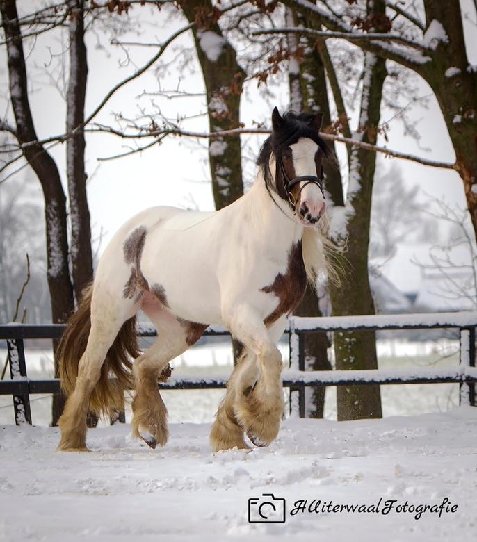 Tinker in de sneeuw -