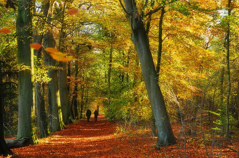 Herfstkleuren - Mijn ouders wandelen in een bos in de buurt van Bergen op Zoom.