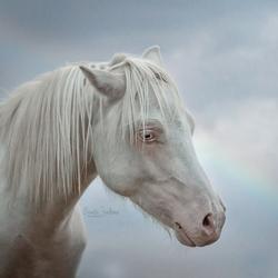 Cremello pony