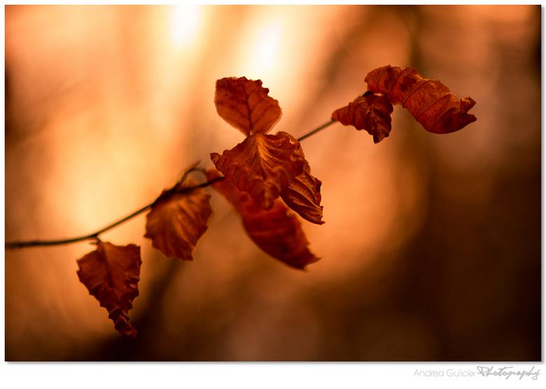 Breakable beauty - Ook deze is in amelisweerd gemaakt. De weinige blaadjes die er nog hangen zijn de verdroogde bladeren van de beuken. Ze zijn zo fra