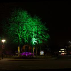 bomen in het groen
