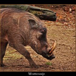 Warthog...